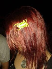 frogvile zaba u kosi
